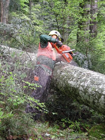 Cogenerazione a biomasse legnose per le aree montane colpite dalla tempesta Vaia